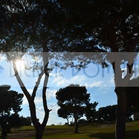 Bilder Golf | Golfbilder Villamartin mit Gegenlicht