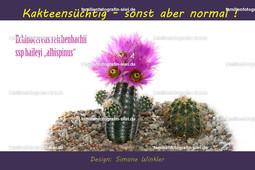 Kakteentasse Echinocereus reichenbachii ssp baileyi albispinus