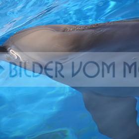 Delfin Bilder | Foto Defin Spanien