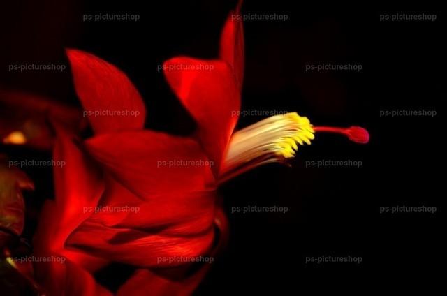 blumen flower (5) | Fauna, Flora, flower, blumen, 動物、植物、フラワーズ, 動物相、植物相
