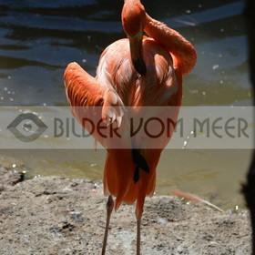 Bilder Sonne und Meer | Flamingo Bilderaus Italien