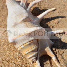 Muschel Bilder im Sand | Muschelbilder am Meer