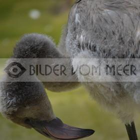 Flamingo Bilder | Rosa Falamingo Bilder