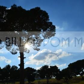 Golf Bilder  | Golf Bilder: dunkle Pinien vor weissen Wolken