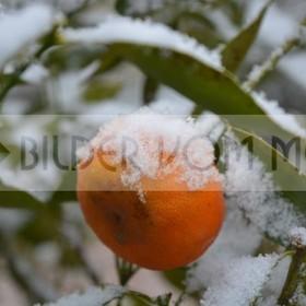News Fotos: Historischer Schneefall Orihuela Costa | Erster Schnee seit 100 Jahren