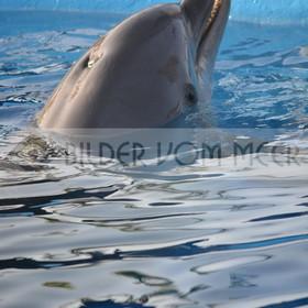 Delfin Bilder | Foto Delfin