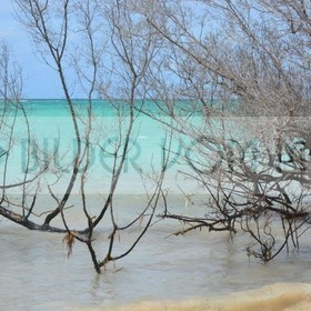 Fotoausstellung Bilder vom Meer | Wilder unberührter Kuba Strand