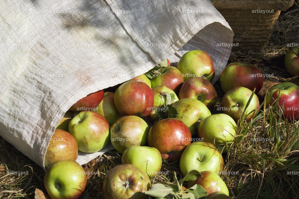 Sack mit reifen gepflückten Äpfeln