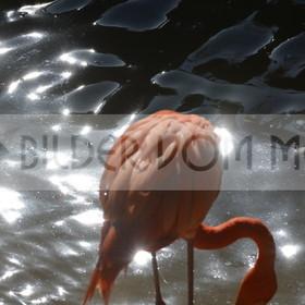 Bilder Sonne | Flamingo Bilder Italien
