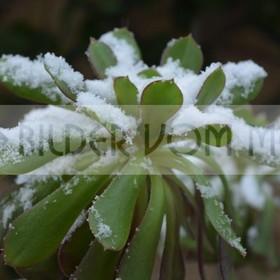Sensationelle Bilder | Wenige Regentage im Jahr und dann plötzlich Schnee