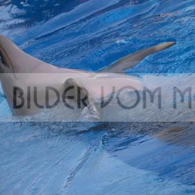 Delfin Bilder  | Foto verspielter Delfin 7 Spanien