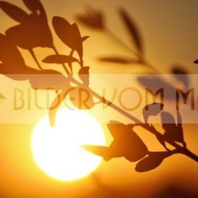 Bilder Sonnenuntergang | Sonnenuntergang in der Steppe, Spanien