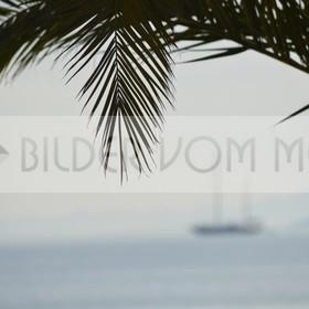 Bilder vom Meer als Wandbild Meer | Wandbild Meer: Schiff unter Palmen am Mar Menor