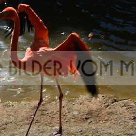 Bilder Sonne & Meer | Flamingo Bilder