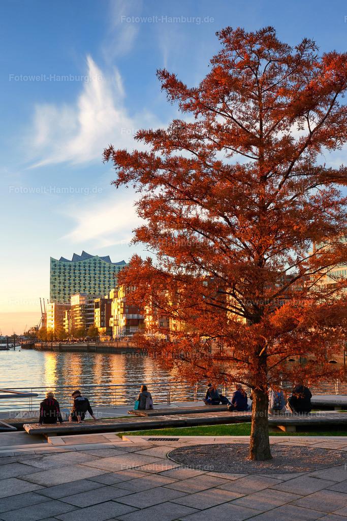 10191016 - Herbstliche Hafencity | Herbststimmung am Grasbrookhafen in der Hafencity.