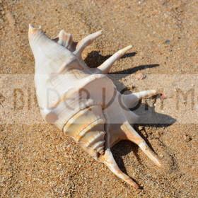 Muschel Bilder Spanien | Muschelbilder vom Meer