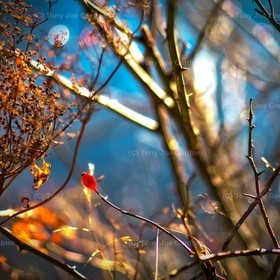Twigs & Light I