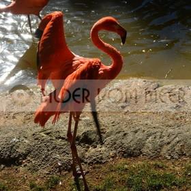 Bilder Sonne und Flamingos | Flamingo Bilder Italien