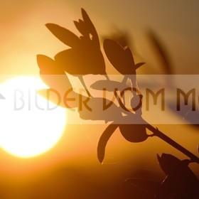 Bilder Sonnenuntergang | Sonne geht in der Steppe Spaniens unter