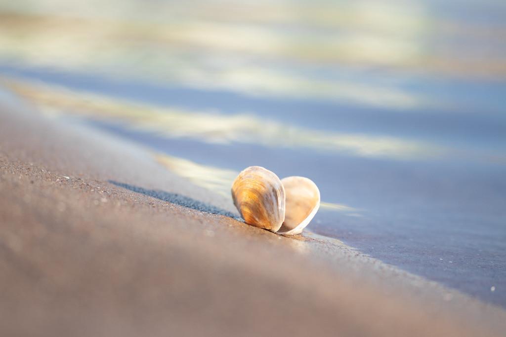 Muschel an der Ostsee