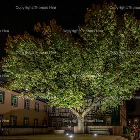 Bensheim,Bergstrasse bei Nacht,Innenstadt ,Wambolder Hof mit Ahornbaum, , Bild: Thomas Neu | Bensheim,Bergstrasse bei Nacht,Innenstadt ,Wambolder Hof mit Ahornbaum, , Bild: Thomas Neu