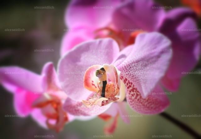 Orchideenlove