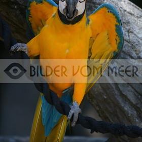 Papagei Bilder | Bilder von Papageien aus Italien