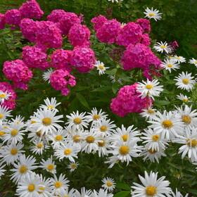 Blütenmeer 6