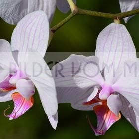 Bilder Blumen | Bilder Blumen Spanien