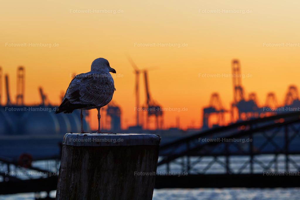 11910332 - Abendrot im Hamburger Hafen