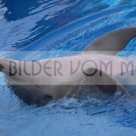 Delfin Bilder | Foto verspielter Delfin 2 Spanien