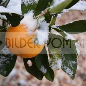 News Fotos: Schneegestöber im Orangenland | Erster Schnee seit hundert Jahren in Orihuela Costa