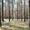 Zur Galerie Landschaft - scenery - paysage - campina