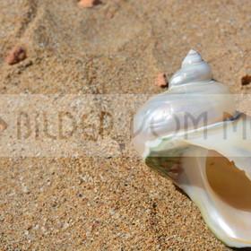 Muschel Bilder im Sand | Muschelbilder vom Meer