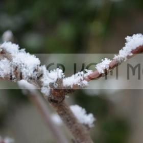 News Fotos: Schnee | erstmals seit 100 Jahren n Orihuela Costa