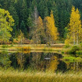 Buhlbachsee | Herbstlicher Buhlbachsee im Nordschwarzwald