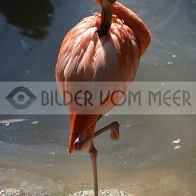 Flamingo Art Bilder | Roter Flamingo Art Bilder
