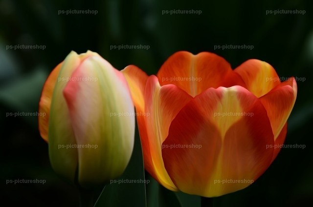blumen flower (4) | Fauna, Flora, flower, blumen, 動物、植物、フラワーズ, 動物相、植物相