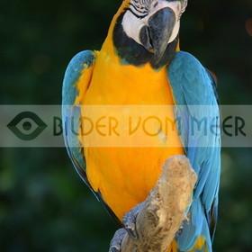 Papagei Bilder | Bilder von Papageien Italien