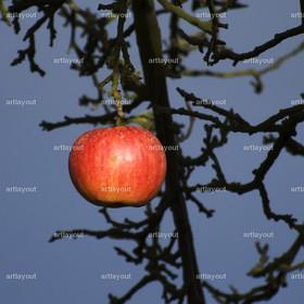 reifer roter Apfel