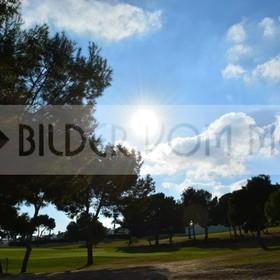 Bilder Golf | Golfbilder: umringt von Pinien