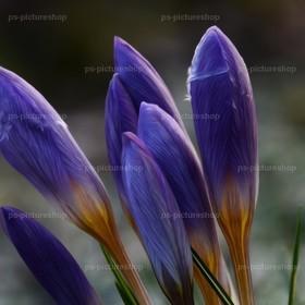 blumen flower (3) | Blumen
