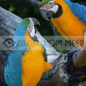 Papagei Bilder | Bilder von Papageien