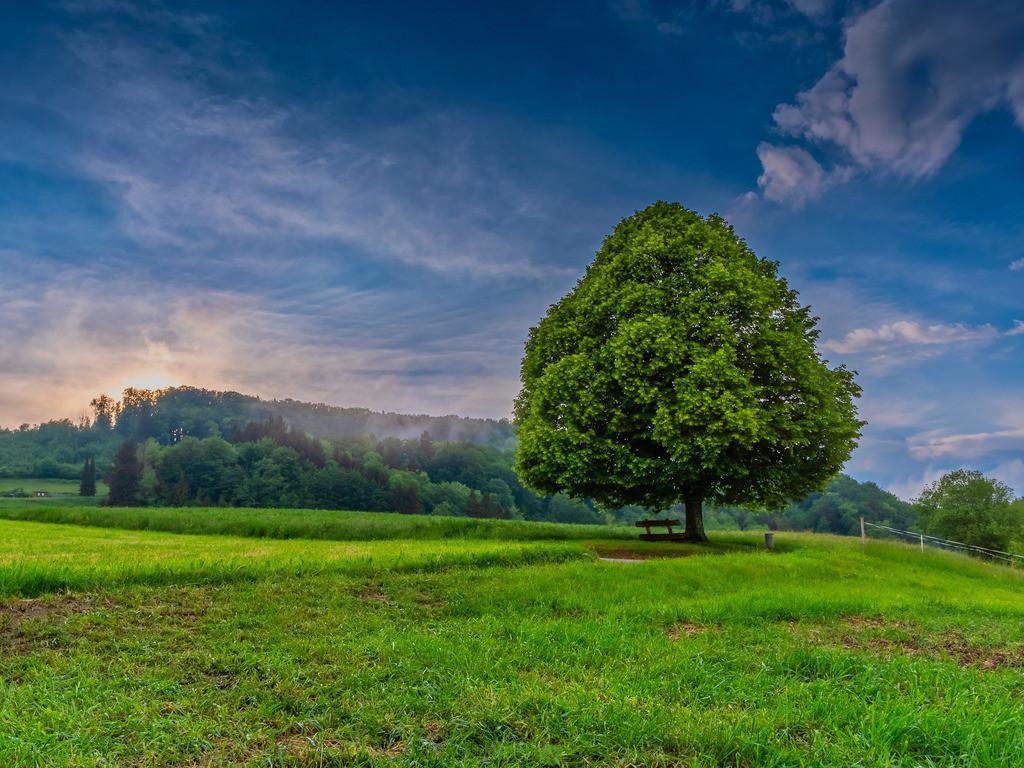 Lindenbaum | Lindenbaum nach einem heftigen Gewitterregen
