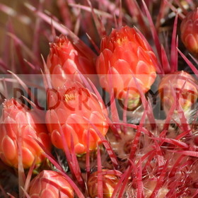 Bilder Blumen | Bilder Blumen Kakteen
