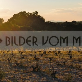 Bilder Sonnenuntergang | Weinreben im Naturpark La Mata, Spanien