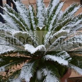 News Fotos: Historischer Schneefall | ERster Schnee seit 100 Jahren in Costa Orihuela, Spanien