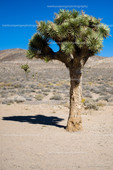 DeathValley September 2015 006