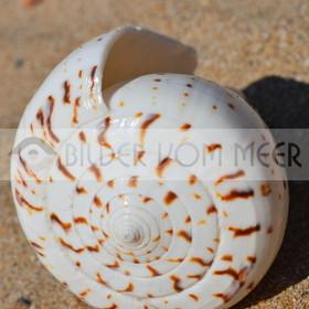 Muschel Bilder aus Spanien | Muschelbilder am Meer