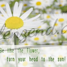 quer_Flower
